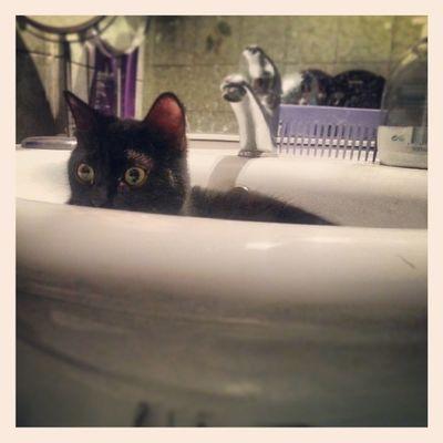 Buffina e il lavandino... Cats Kittens Funny