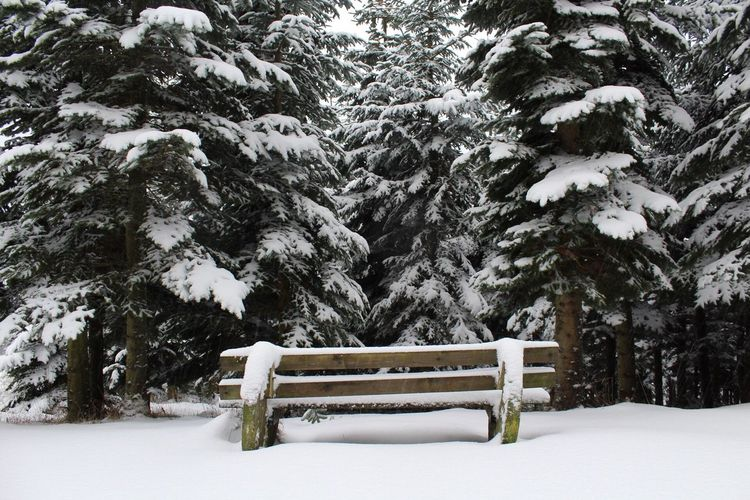 Snow Winter Cold Temperature Weather Nature Tree Beauty In Nature Park - Man Made Space Tranquility Landscape Scenics No People Snowing Day Outdoors Seat