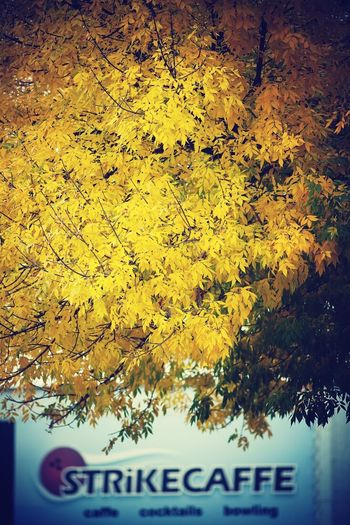 Autumn in the town. Eye4photography  Streetphotography Eyem Best Shot Autumn