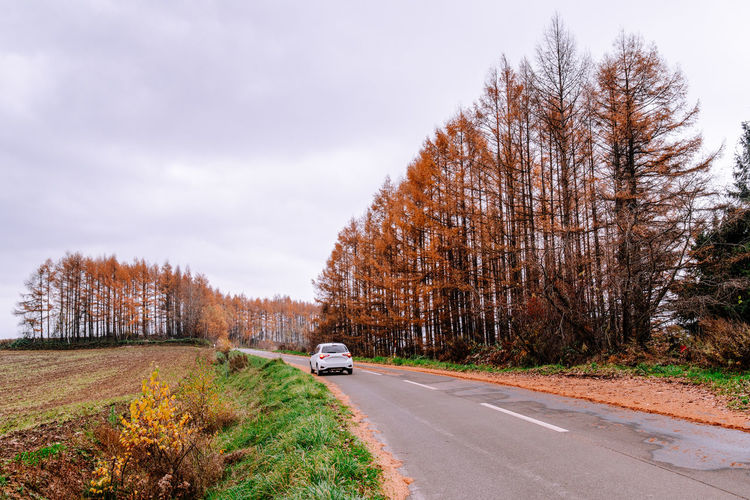White car of road with red cedar trees at roadside Tree Motor Vehicle Car Transportation Road Plant Mode Of Transportation Nature Direction Sky Autumn Beauty In Nature Outdoors Travel Drive Self-driving Japan Hokkaido Biei Furano Season  Environment Cedar Autumn colors