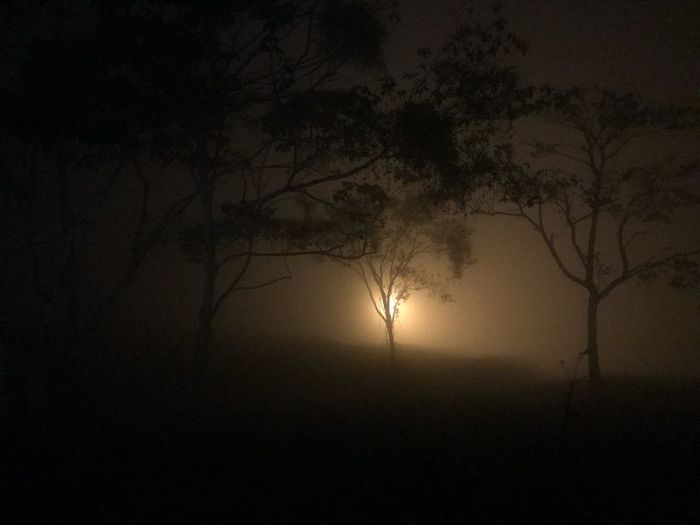 Foggy night @rancholaneblina Tree Silhouette Nature Branch Tranquility Tranquil Scene Beauty In Nature Night Scenics Dark Solitude Landscape Mist Outdoors Sunset No People Hazy  Sky Fog Growth