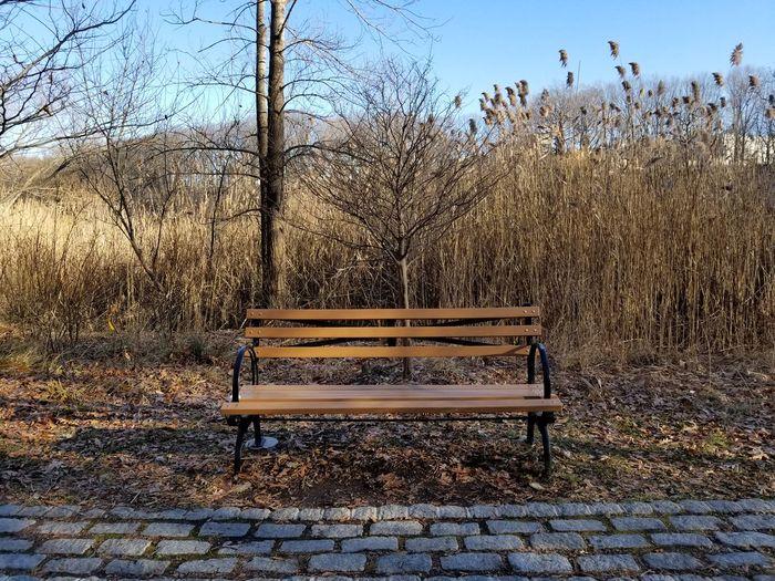 Bench at park Sky Bench Park Park Bench Fallen Leaf