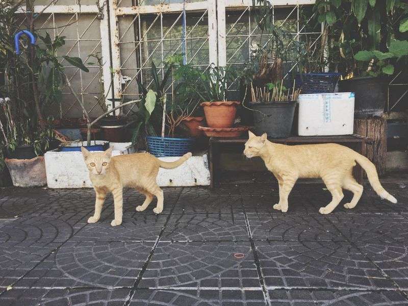 EyeEm Selects Mammal Animal Themes Animal Domestic Animals Domestic Pets Outdoors Standing Nature Feline Animal Representation Potted Plant Cat Dog Canine Vertebrate One Animal No People Day Plant