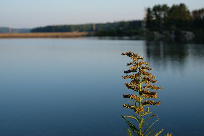 Plant by lake against clear sky