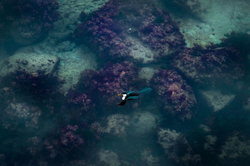 Drift Full Frame EyeEm Selects Purple Green Blue Coast Seaweed Coral Bird Water Bird Nature Animals In The Wild Water Animal Wildlife Sea Life