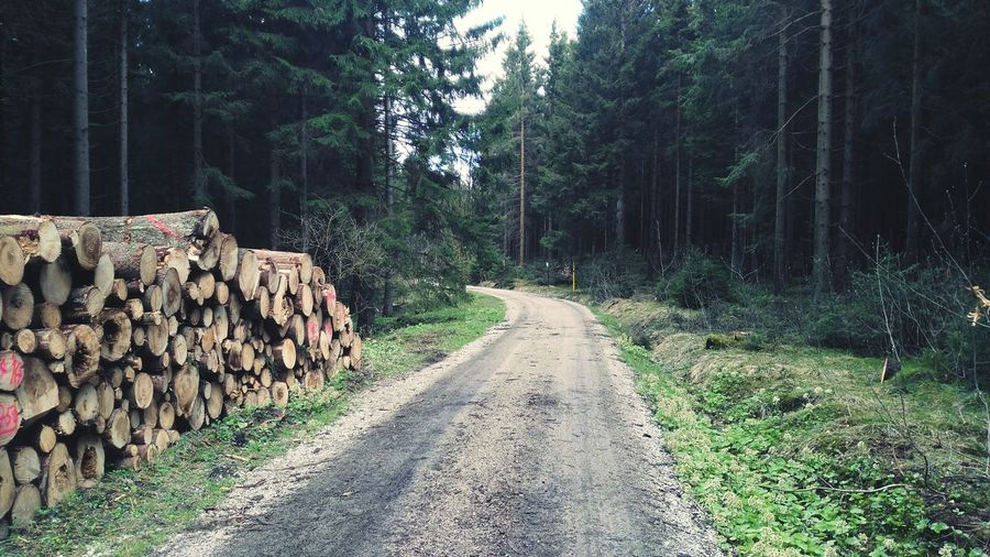 The Way Forward Nature Forest