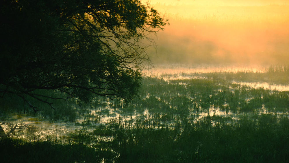 """Flooded landscape in the national park """"Unteres Odertal"""". One of Europes last natural river landscapes. The early morning mist gives this place that ceratain something that attracts me to go there over and over. Brandenburg Germany 🇩🇪 Deutschland Landschaft Morning Mist Morning Sunrise National Park Atmospheric Mood Beautiful Place Beauty In Nature Beauty Of Nature Flooded Landscape Landscape Light And Shadow Magic Moments Mist Nationalpark Natural Landscape Nature River Landscape Sunrise Tree Unteres Odertal Water Water Landscape Wilderness First Eyeem Photo"""