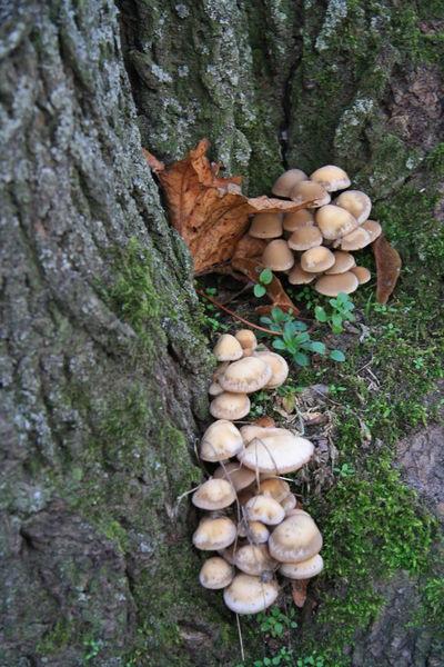 Alte Gräber Baumwurzel Mit Moos Bäume Fried Friedhof Grabeinfassung M Gräber Kape Landschaft Herst Makro Eibe Makro Pilz Makro Pilze Weg Zaun
