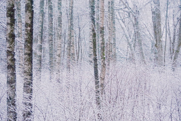 winter trees Weather Background Snow Covered Snow Frozen Nature Frozen Outdoors Nature Tree Trees Tree Trunk Tree_collection  Winter Wintertime Winter Trees Winterscapes White White Color Pastel Power Pastel Colors Backgrounds Full Frame Pattern Textured  Close-up No People Textile Day