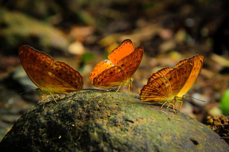 Close-Up Of Butterflies On Rock
