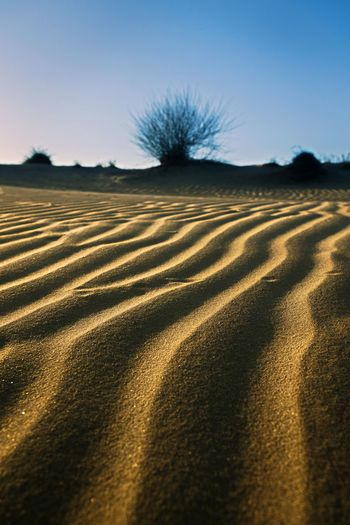 Pattern formed by winds in desert, Sam dunes, Rajasthan, India Rajasthan India Desert Thar Desert Wind Pattern Nature Colour Image Travel Travel Destinations Backgrounds Creative Abstract Leading Lines EyeEmNewHere EyeEm Best Shots EyeEm Gallery Sand Sunset Non-urban Scene Outdoors Creative Light and Shadow Wide Angle Bare Tree Shadow Summer Sunlight Sky Landscape Barren