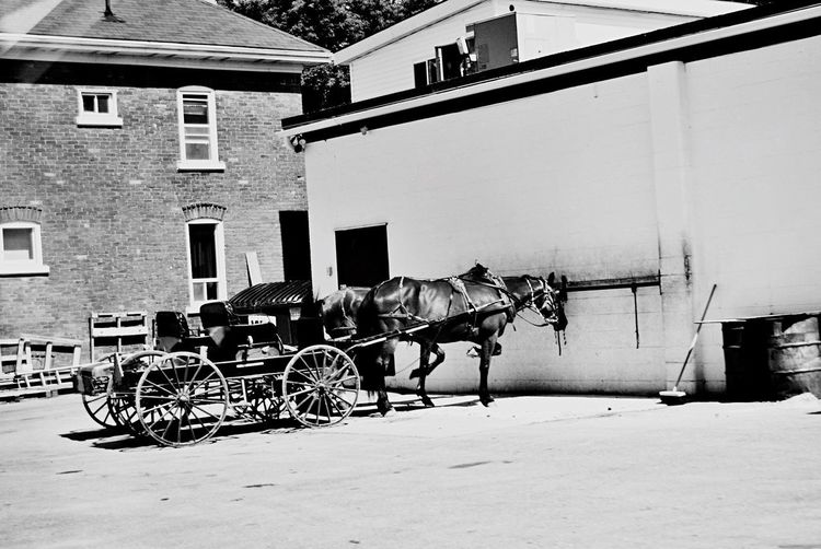 A different kind of parking lot. Horse Built Structure Domestic Animals Building Exterior Architecture Outdoors Real People Men Mammal Day Horse Cart Sky One Person City People EyeEmNewHere Blackandwhite Horse Cart Wagon Wheel Transportation Old-fashioned