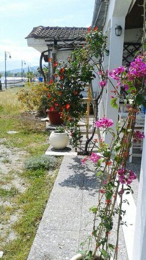 Flower Flowers Roses Rose🌹 Medusa Seafood Restaurant Leptokarya Enjoying Life Spring Greece