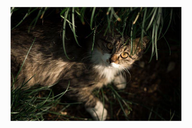 流浪猫 流浪猫 秋日时光 惬意 Animal Animal Themes One Animal Transfer Print Feline Cat Mammal First Eyeem Photo