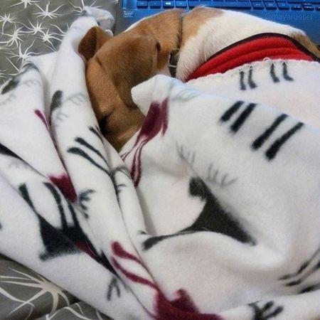 Lundi Cocooning Happynewyear 2016 Bonneannee Jackrussel Hug Love Dog Instacute Instalove Ilovemydog Iloveyou Jrt Happynewyear2016 Lovedogs Dogstagram Doggy