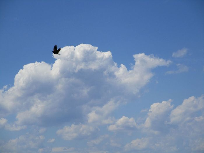 Beauty In Nature Beautiful Day Blue Sky and white fluffy clouds And A Fly By Low Angle View Outdoors No People