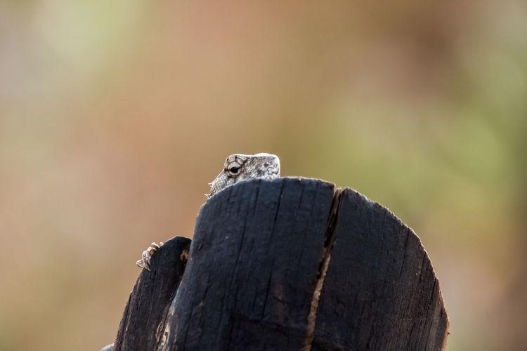 Close-up of lizard head on wooden log