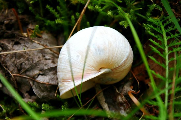 Nature Snail Close-up Fragility No People Outdoors Plant Day Beauty In Nature Animal Themes Beautiful Thüringer Wald Thüringenentdecken Thüringen_entdecken Nature EyeEmNewHere