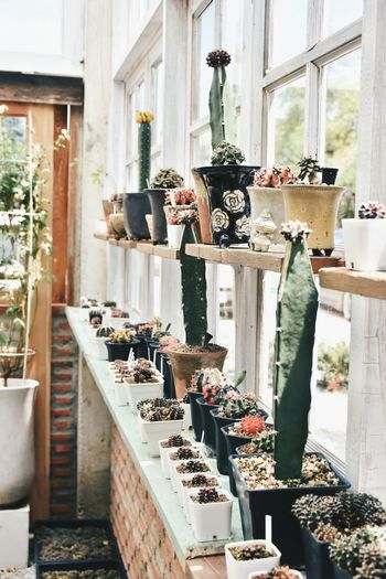 Potted plants on window sill and shelves