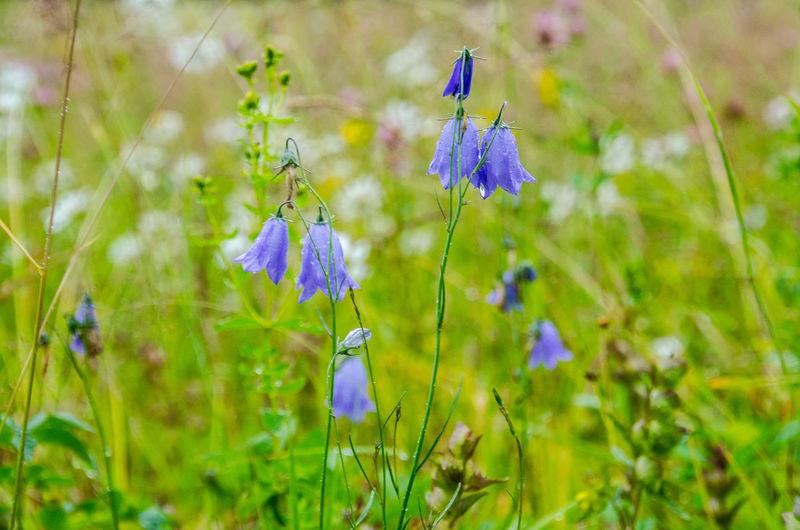 #bee #finland #flowerfarm #flowers #green #landscape #rainyday #summer #waterdrops