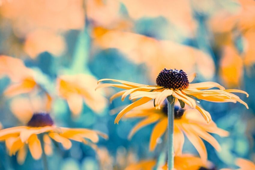 Flower Blume Nature Floral Nature_perfection Macro Photography Outdoor Photography Flowers, Nature And Beauty Flowers,Plants & Garden Naturelovers