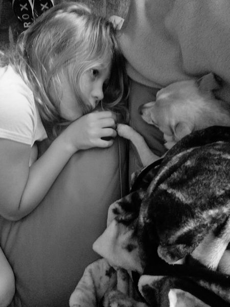 Best Friends Dog Young Girl Chichuahua Pet Friends Blonde Girl Child Togetherness Girls Human Hand Females Childhood Young Women