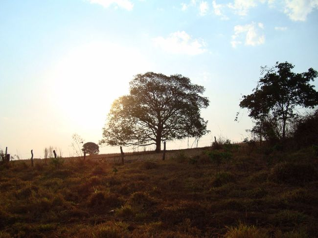 Cerrado vegetation. Goias state. Treegasmic Tuesday Trees TreePorn Hugging A Tree