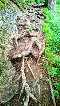 Out In The Woods Nature Photography Tree Tree Roots  Roots Forest Photography Path Creepy Woods Proliferation Rampant Usuriousness Exuberantly Coiling Wriggle Showcase July