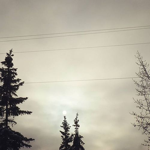 The Sun is trying hard today. Cloudy Trees Sky Evergreen Winter Breakonthrough CherryOnTop Gloom Ohchristmastree Monotone