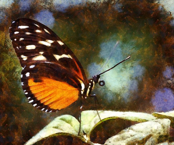 Animal Markings Animal Themes Animal Wildlife Animals In The Wild Beauty In Nature Butterfly - Insect Close-up Day Digital Art Fragility Insect Nature No People One Animal Outdoors Photo Manipulation Wildlife