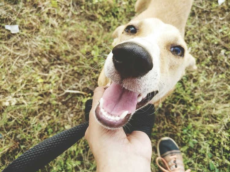 JerryDog Pets Domestic Animals High Angle View Day Outdoors Grass Close-up Nature Doggo Cute One Animal Pets High Angle View Day Outdoors Grass Close-up Human Body Part Nature Human Hand Smiling Face