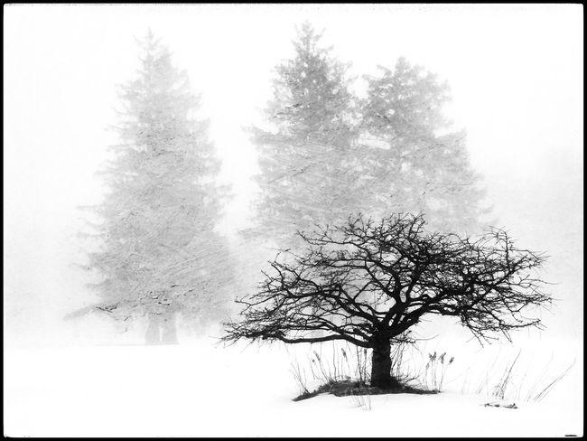 Winter Winter Wintertime Trees Fog Snow