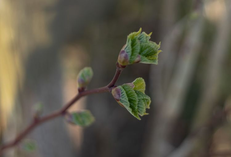 Close-up of green plant