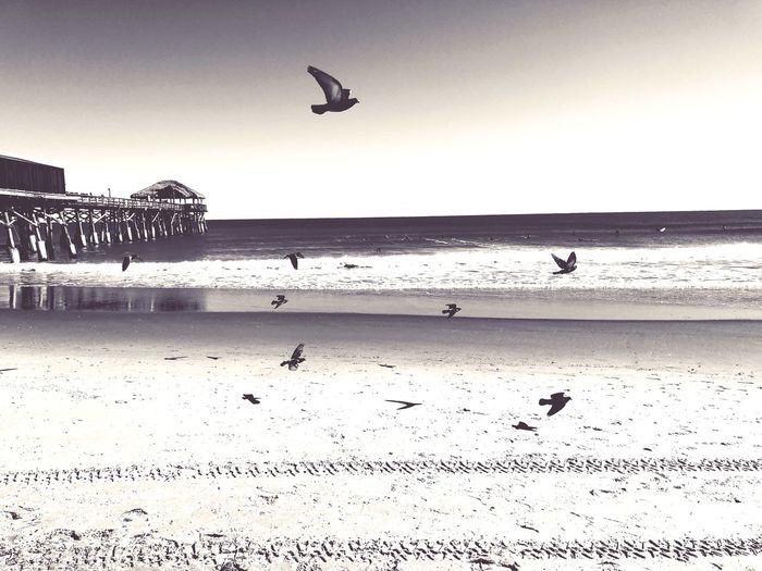 Free Beach Sea Bird Water Nature Sand Animals In The Wild Animal Themes Horizon Over Water Outdoors Beauty In Nature Seagull Wave Day Silhouette Scenics Flying Clear Sky No People Sky