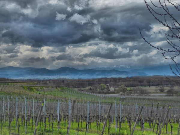 Kaiserstuhl Burkheim Weinberg Wineyard Vineyard Showcase April Cloudscape Landscape Landscape_Collection Landscape #Nature #photography Eyem Gallery Eyemphotography Nature On Your Doorstep Taking Photos Yeah Springtime! Aprilweather