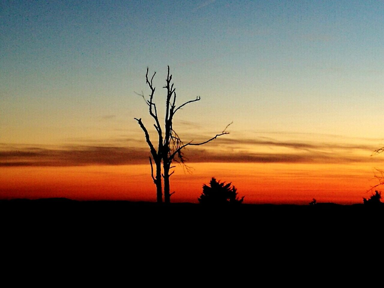 sunset, majestic, silhouette, lone, beauty in nature, tranquility, tranquil scene, landscape, nature, scenics, bare tree, solitude, remote, isolated, horizon over land, tree, outdoors, tree trunk, no people, clear sky, branch, sky