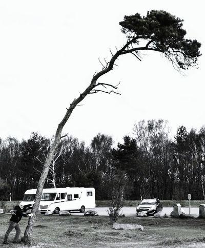 Tree Car Transportation Land Vehicle Outdoors Sky Day No People Branch Water Nature The Great Outdoors - 2017 EyeEm Awards EyeEmNewHere The Street Photographer - 2017 EyeEm Awards Schweden Ystad Beach Ystad Ystadssaltsjöbad