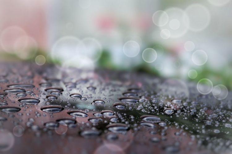 雨 水滴 雨水 雨粒 車 クルマ 屋根 ワックス Rain Rainy Days RainDrop Waterdrops Car Roof Wax Drop Fragility Day Water Selective Focus Beauty In Nature Freshness Nature EyeEm EyeEmBestPics