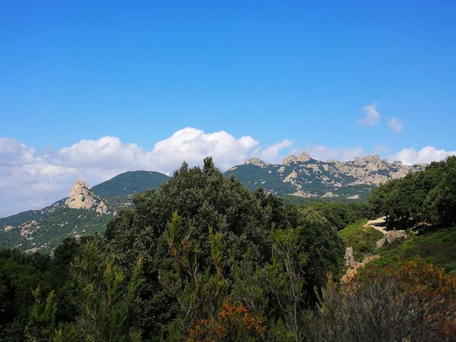 Panoramic Landscape Sardinia Sardegna Italy  Sardinia Sardegna Tree Mountain Mountain Peak Pinaceae Sky Landscape Mountain Range Cloud - Sky Valley Growing Blooming Plant Life