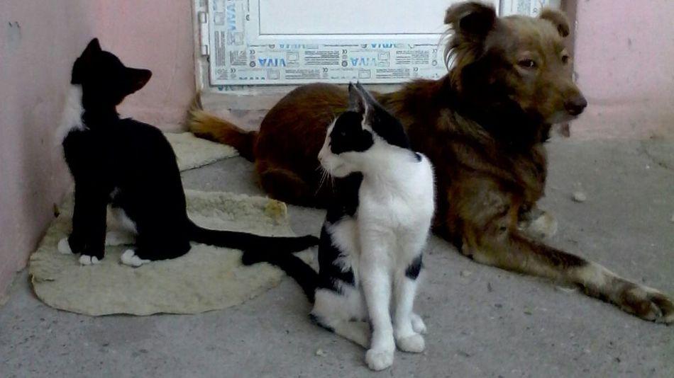 Laying Down Eyeem Market Animals Dog Pets Cats Chilling Kittens Wolfzuachis Bff