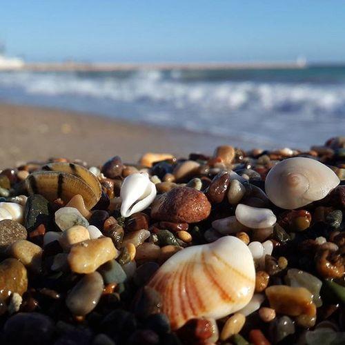 Mersin Tasucu Tasucusahil Akdeniz Denizdenesentuzlumeltem Denizkabukları