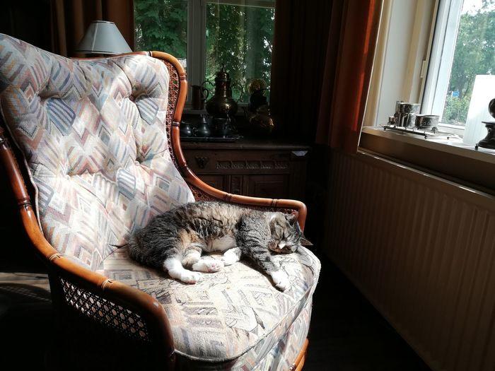 Cat sleeping on window