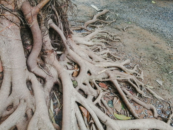 High angle view of driftwood on sand
