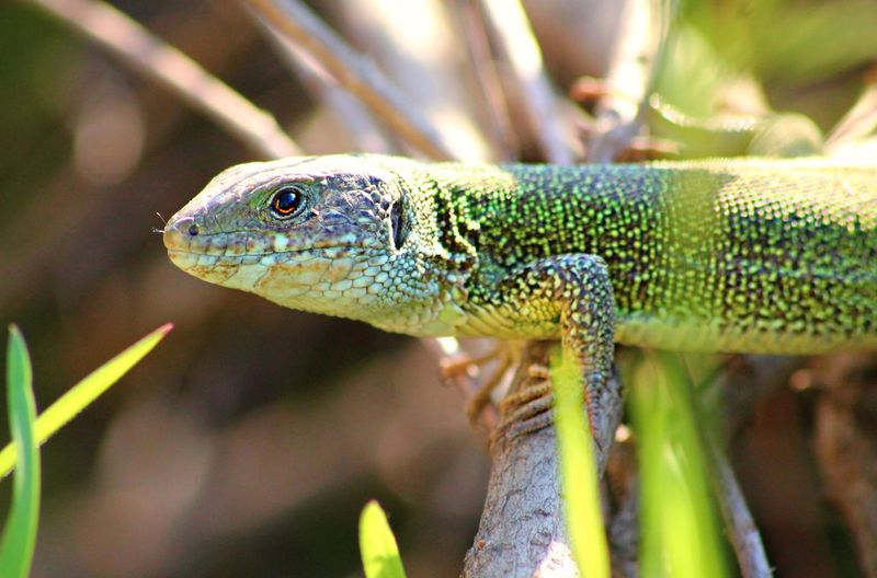 we're just look to each other's face... it was so real Green Animal Themes Eyes Lizard Nature No People One Animal Outdoors Reptile