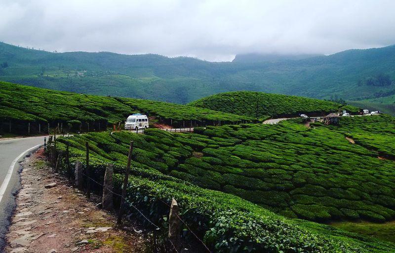 Tea plantation in field against sky