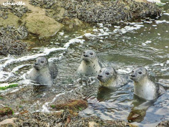 Casa de los peces. A Coruña. Loveanimals Acoruña Aquarium Animals Animal Photography