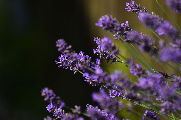 Flower Herbs