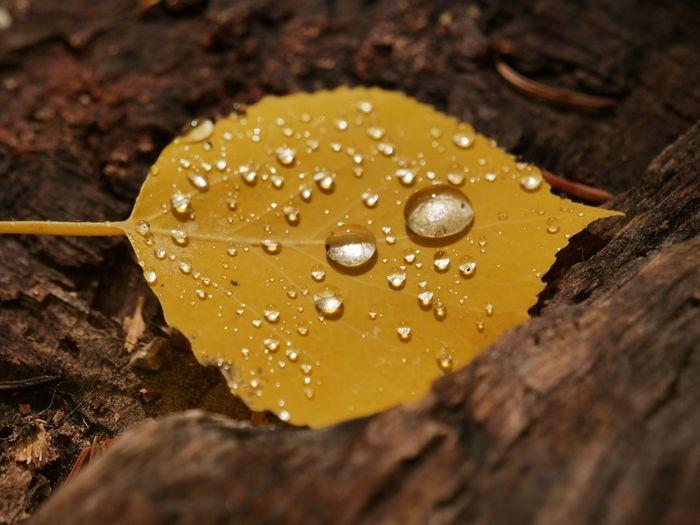 Close-up of wet yellow mushroom growing on rainy day