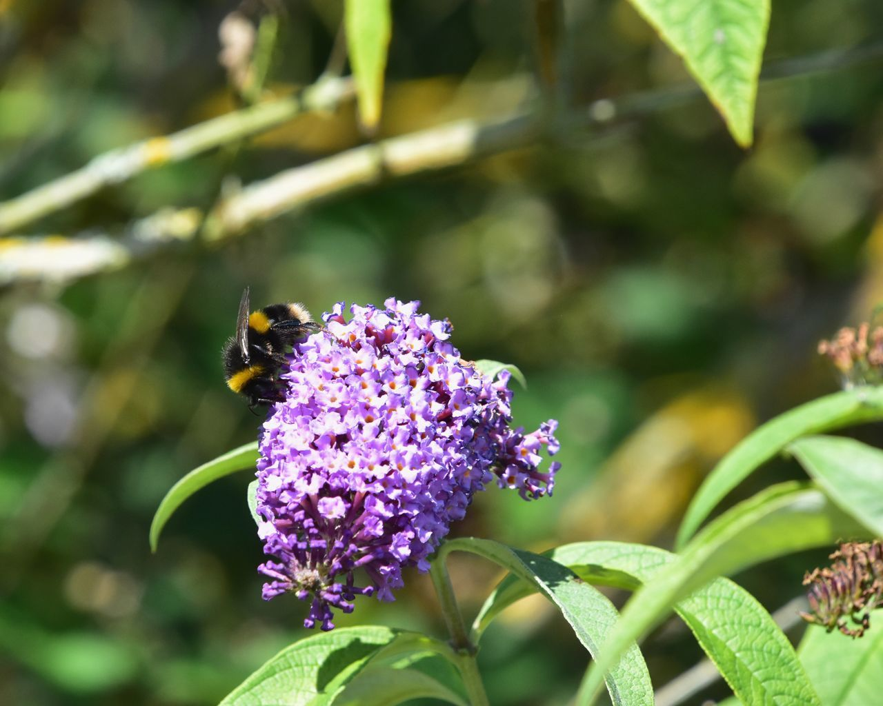 insect, flower, one animal, animals in the wild, animal themes, purple, nature, freshness, growth, beauty in nature, plant, fragility, focus on foreground, pollination, bee, animal wildlife, petal, day, green color, outdoors, no people, leaf, bumblebee, close-up, flower head