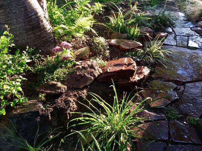 Plant Nature Rock - Object Growth No People Outdoors Day Beauty In Nature Garden Photography Plants And Flowers Irrigation Waterdrops Gardening Reflection Reflections Path Pathway Path In Nature
